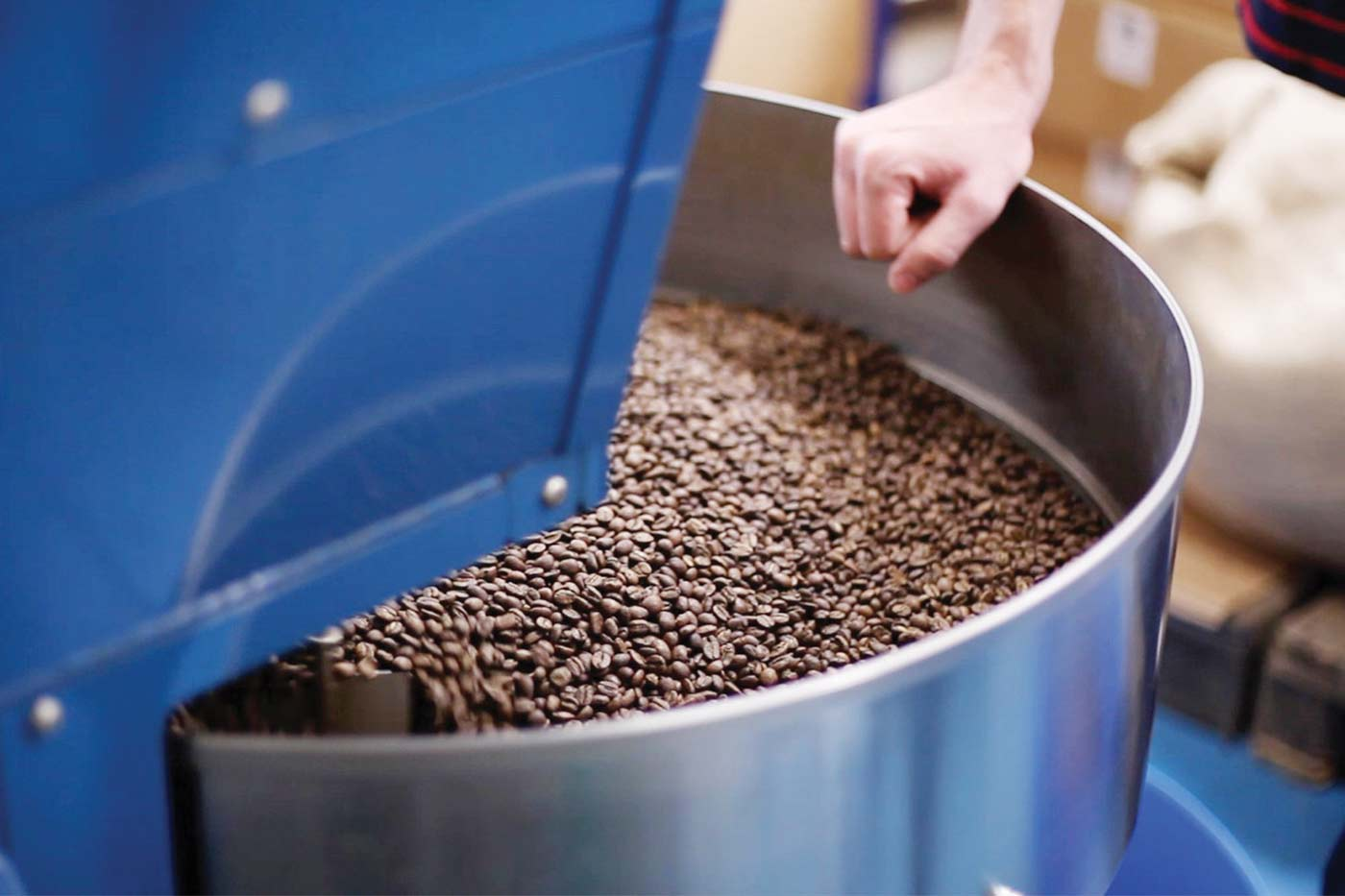 Beans fresh from roasting at Colonna Coffee